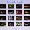 SKN48 TeamS