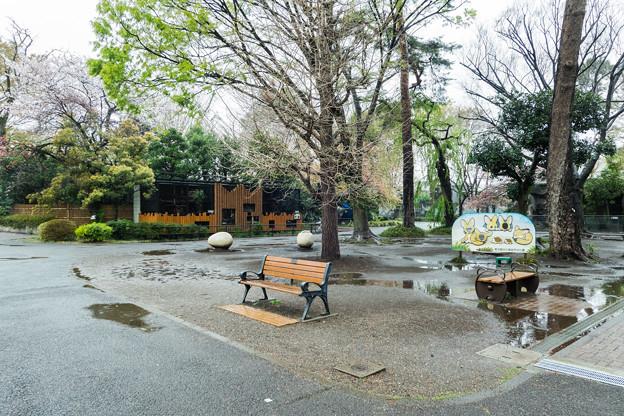 Photos: ヤマネコ舎