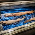 Photos: 深海鮫の剥製
