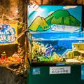 Photos: めだか小学校水槽