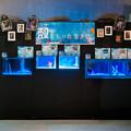 Photos: どんぶら水族館 殻をもった生き物エリア