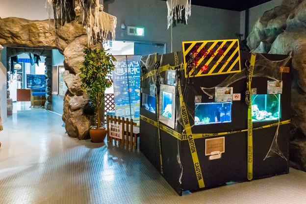 どんぶら水族館  危険な魚コーナー