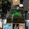 Photos: ブラックゴーストの水槽