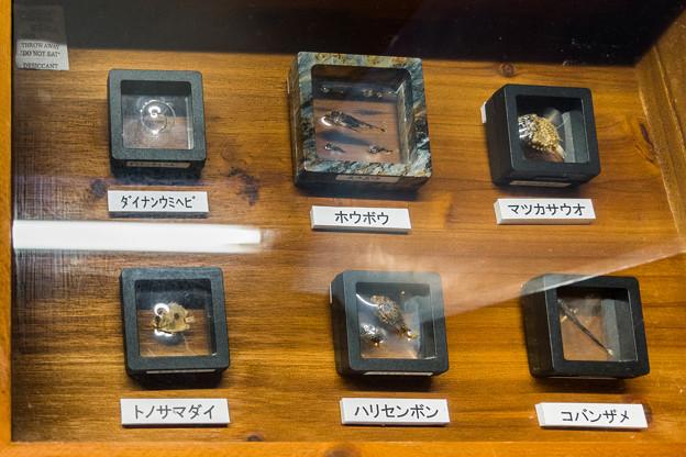鈴木香里武のひもの標本コレクション