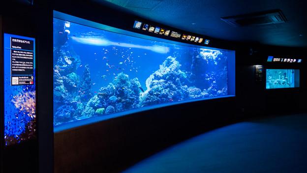 サンゴ礁の海水槽