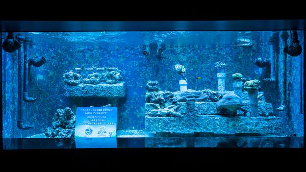 サンゴ礁の再生~恩納村の海から~