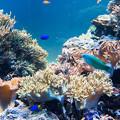 Photos: サンゴ礁の海水槽