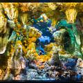 洞窟に咲く花