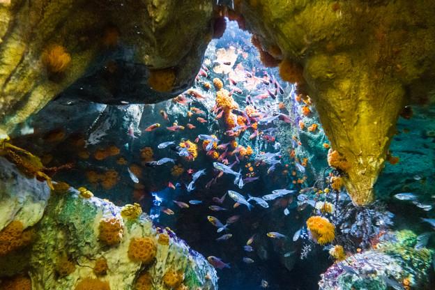 洞窟に咲く花の生き物