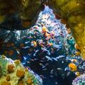 Photos: 洞窟に咲く花の生き物