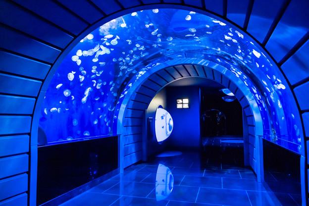 クラゲトンネル