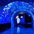 Photos: クラゲトンネル