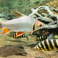 Photos: カラープロキロダス