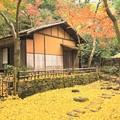 写真: 茶室と銀杏の落ち葉