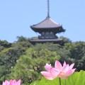 Photos: 蓮と三重塔