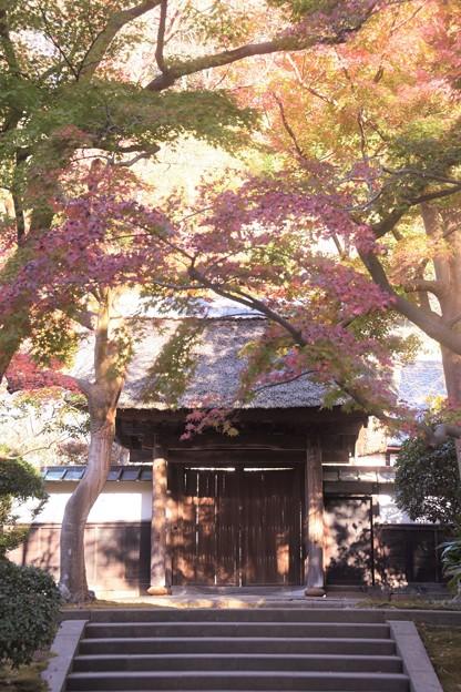 Photos: 円覚寺紅葉