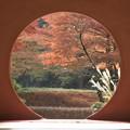 Photos: 明月院丸窓紅葉