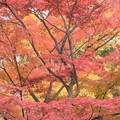 Photos: 紅葉と銀杏