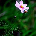 写真: 晩秋・・裏庭の花たち