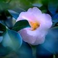 Photos: 晩秋・・裏庭の花たち