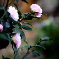 晩秋・・裏庭の花たち
