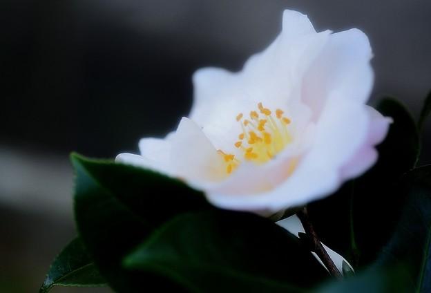 師走の庭に咲く花