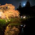 浅井の一本桜 3