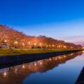 流川の桜並木 ライトアップ