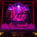 アートアクアリウム ~博多・金魚の祭~