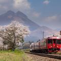 南由布駅の桜