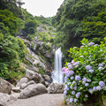 写真: 見返りの滝 あじさい