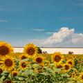 写真: 柳川 ひまわり園 2