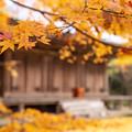 富貴寺 秋景 3