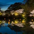御船山楽園 桜 ライトアップ 2