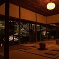 御船山楽園 桜 ライトアップ 3