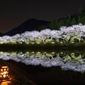 赤穂山八天桜 ライトアップ