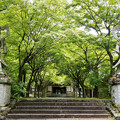 Photos: 呑山観音寺 新緑