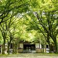 呑山観音寺 新緑 2