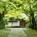 呑山観音寺 新緑 3