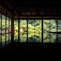 環境芸術の森 新緑