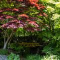 環境芸術の森 新緑 6