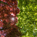 環境芸術の森 新緑 7