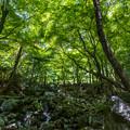 環境芸術の森 新緑 8