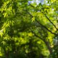 環境芸術の森 新緑 9
