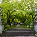 呑山観音寺 新緑
