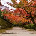 仁比山神社 紅葉 2