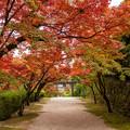 仁比山神社 紅葉 3