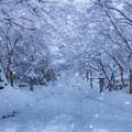 秋月城跡 雪景色 2
