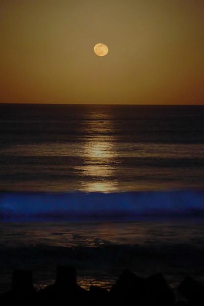 夜光虫の海に昇る