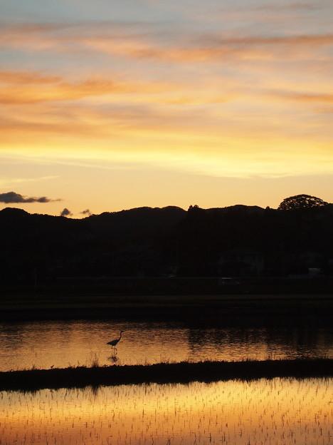 鷺の居る夕景
